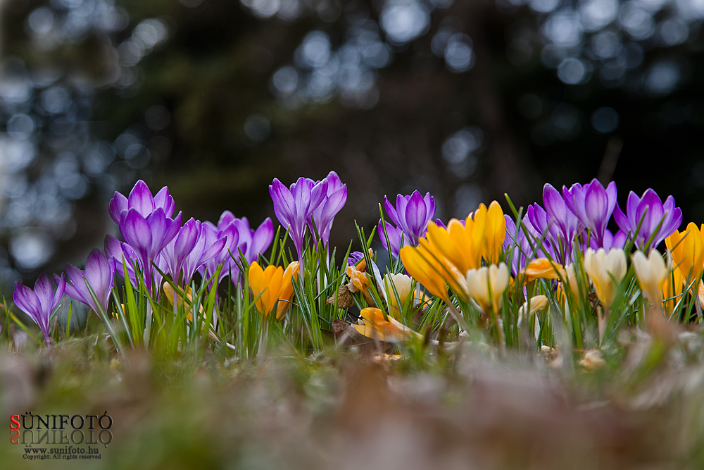 vácrátóti botanikus kert, tavasz, kirándulás, program, arborétum, természet,